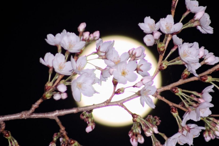 Flowers in front of a full moon.